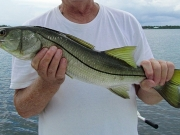 snook-fishing-permits